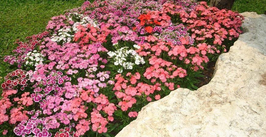 Flower-beds-edmond